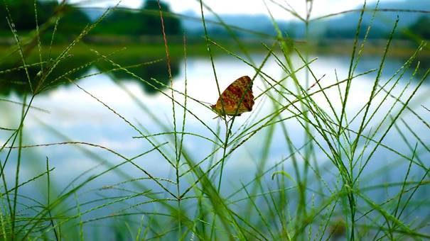 vlinder_bij_water